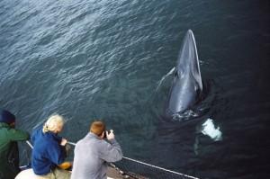 Courtesy of © Sea Life Surveys