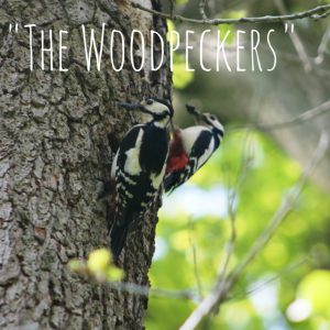 -The Woodpeckers-